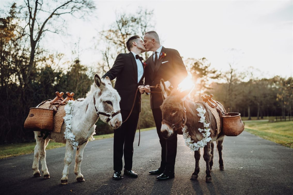 Incorporating animals into your wedding day 1