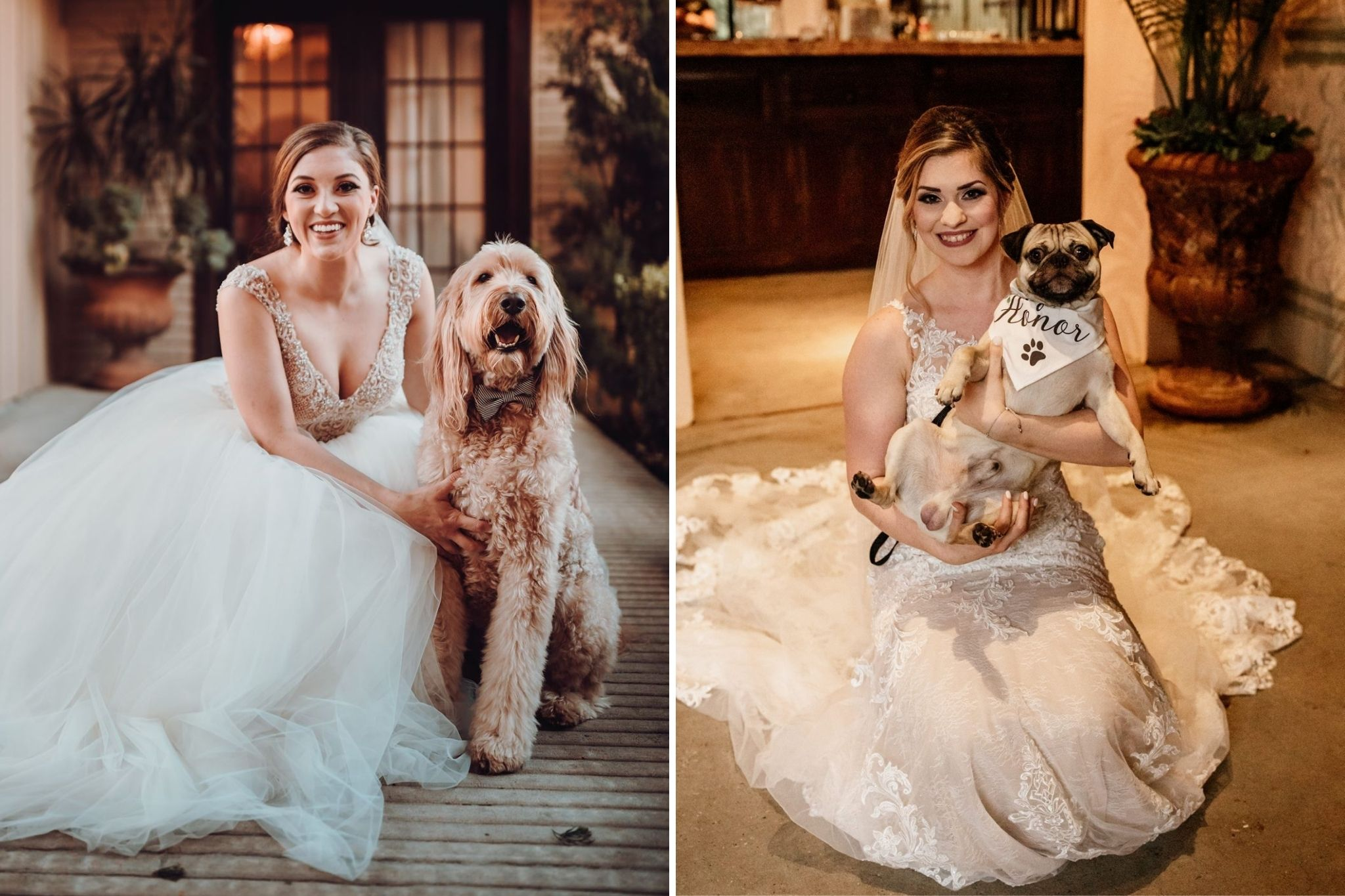 Dogs: Incorporating Animals Into Your Wedding Day